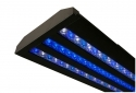 "Acan Lighting 18"" Series Double Blue LED Lighting Fixture 600DB-18B"