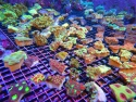 Nano Coral Package Mix 6 pc. - Assorted sp.
