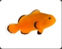 ORA Naked Clownfish