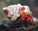 Critter Crew Package-  Variety Hermit Crabs