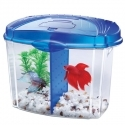 Betta Bowl Kit