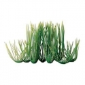 Wonders Plant Hairgrass