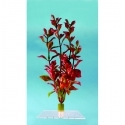 Water Wonders Plant Red Ludwigia