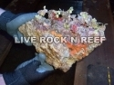 Live rock specials with shipping included.