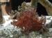 detail_10727_scorpionfish.jpg