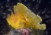 detail_11618_yellowleaffish.jpg