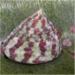 detail_9591_BandedTrochusSnail.jpg