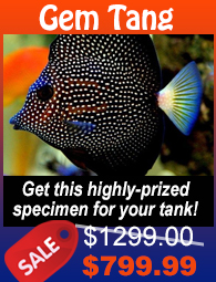 Gem Tang Fish Sale