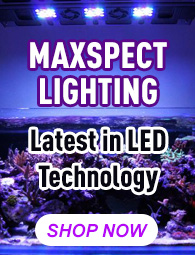 Maxspect LED Lighting