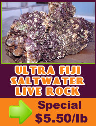 Ultra Fiji Saltwater Live Rock