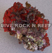 Live Rock Example